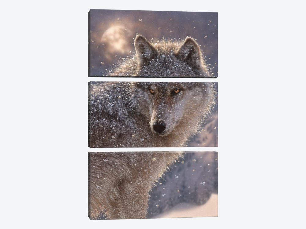 Lone Wolf, Vertical by Collin Bogle 3-piece Canvas Print