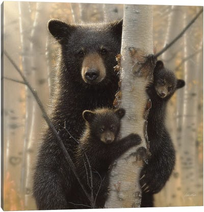 Mama Black Bear, Square Canvas Art Print