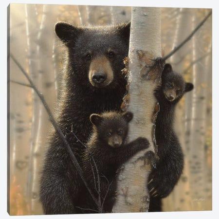 Mama Black Bear, Square 3-Piece Canvas #CBO46} by Collin Bogle Canvas Art