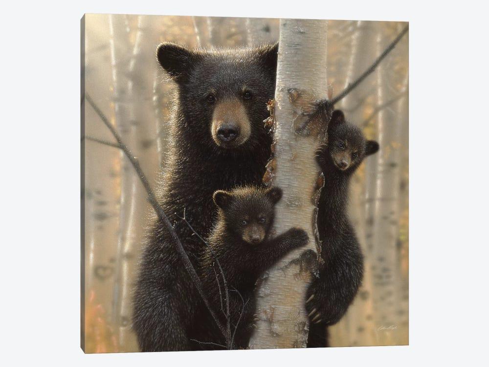 Mama Black Bear, Square by Collin Bogle 1-piece Art Print