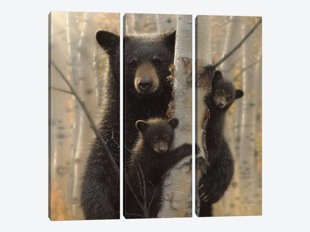Mama Black Bear, Square by Collin Bogle 3-piece Canvas Print
