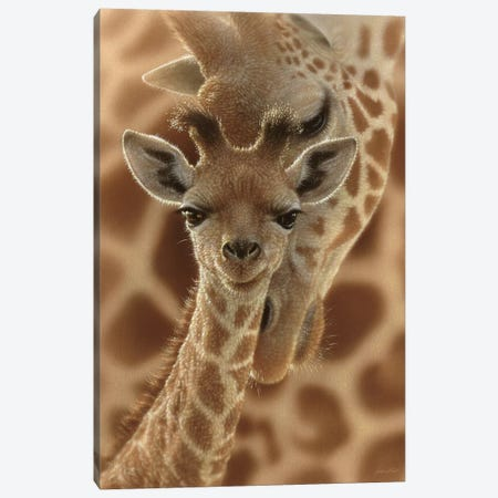 Newborn Giraffe, Vertical Canvas Print #CBO48} by Collin Bogle Canvas Print