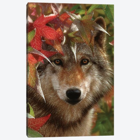 Autumn Encounter - Gray Wolf, Vertical Canvas Print #CBO4} by Collin Bogle Art Print