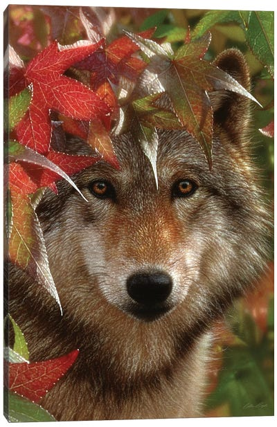 Autumn Encounter - Gray Wolf, Vertical Canvas Art Print