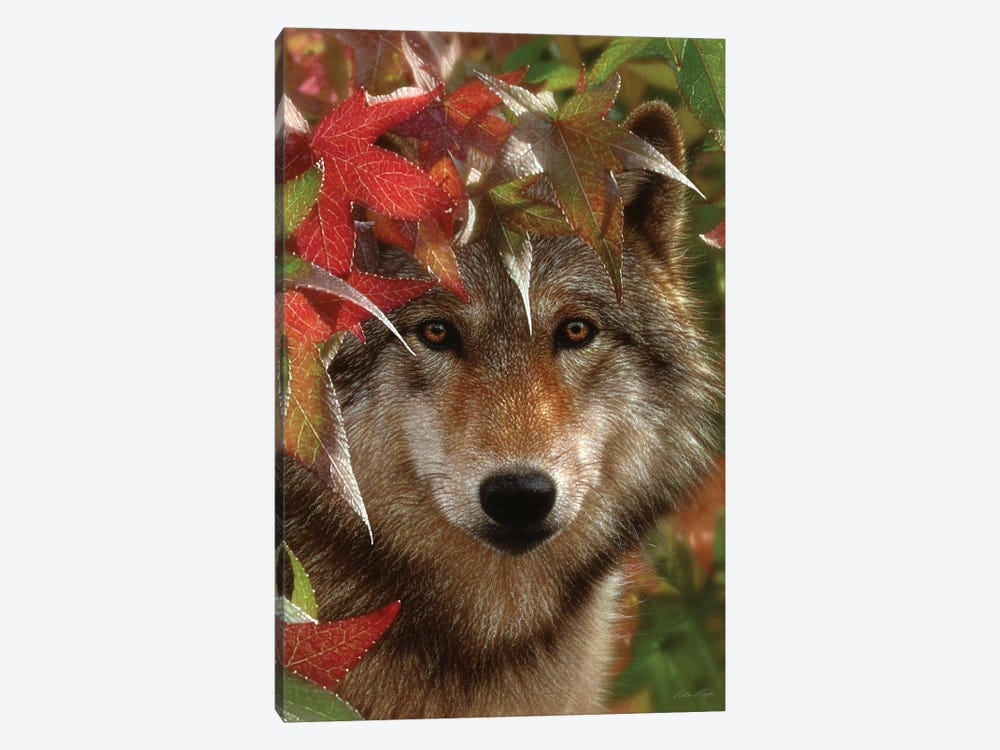 Autumn Encounter - Gray Wolf, Vertical by Collin Bogle 1-piece Canvas Art Print