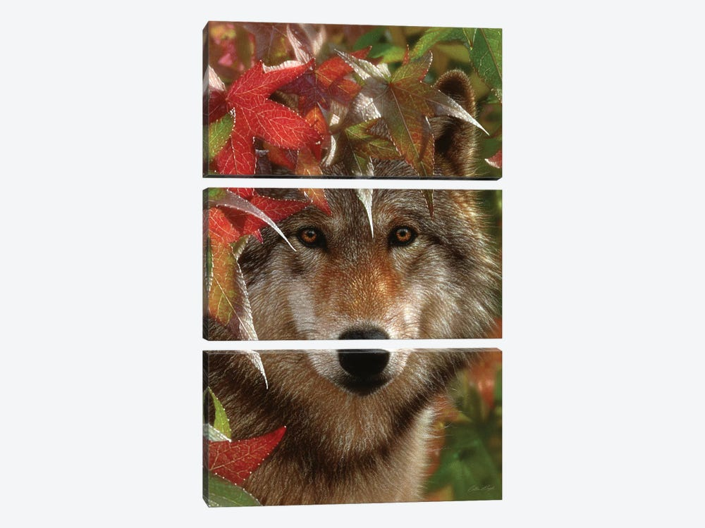 Autumn Encounter - Gray Wolf, Vertical by Collin Bogle 3-piece Canvas Print