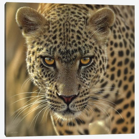 On The Prowl - Leopard, Square Canvas Print #CBO51} by Collin Bogle Canvas Wall Art