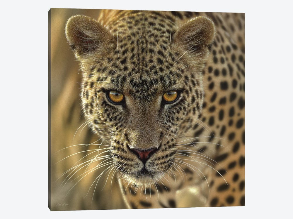 On The Prowl - Leopard, Square by Collin Bogle 1-piece Art Print
