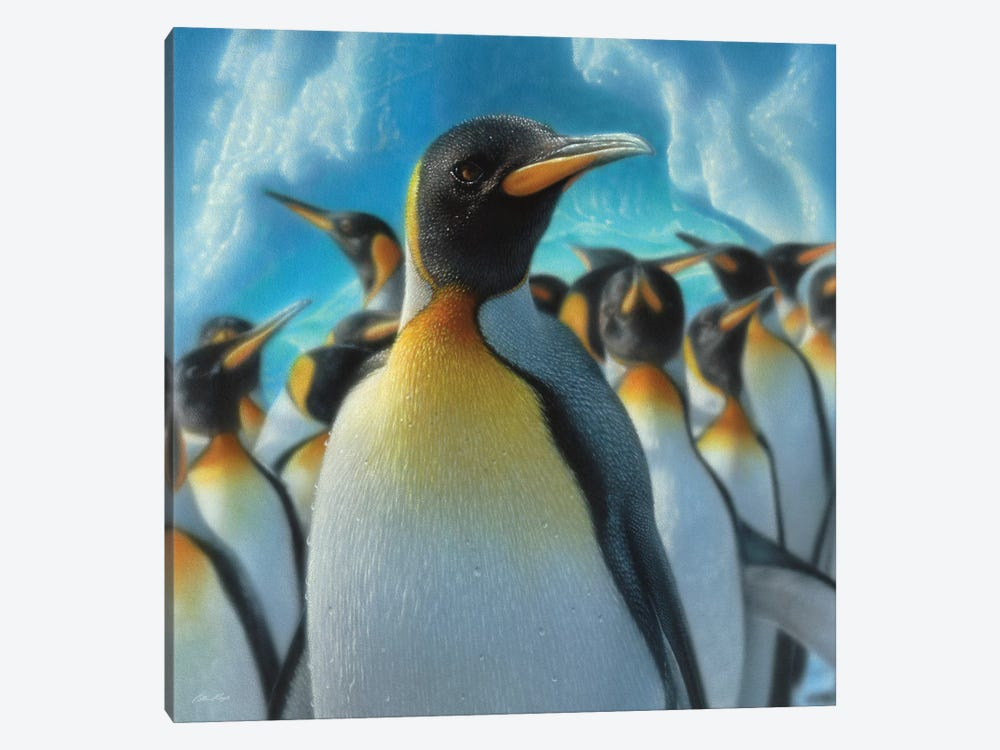 Penguin Paradise, Square by Collin Bogle 1-piece Canvas Artwork