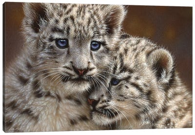 Snow Leopard Cub Playmates, Horizontal Canvas Art Print
