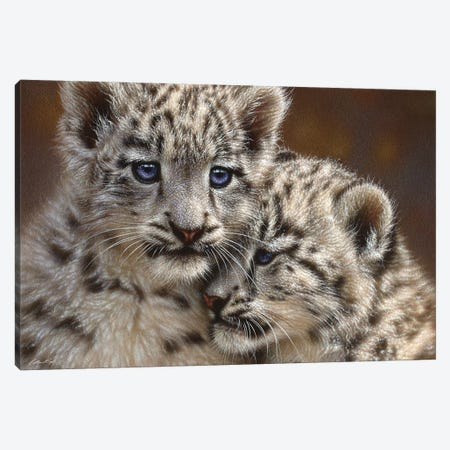 Snow Leopard Cub Playmates, Horizontal 3-Piece Canvas #CBO57} by Collin Bogle Canvas Print