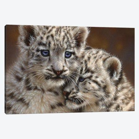 Snow Leopard Cub Playmates, Horizontal 3-Piece Canvas #CBO57} by Collin Bogle Canvas Print