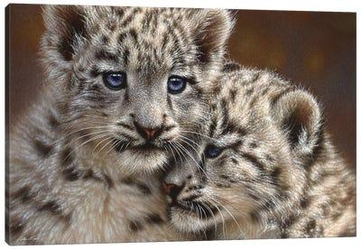 Snow Leopard Cub Playmates, Horizontal Canvas Art Print