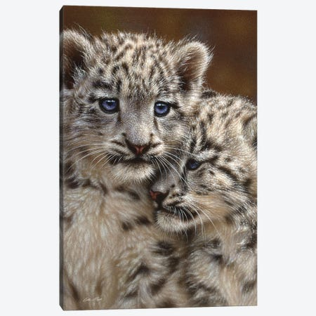 Snow leopard Cub Playmates, Vertical 3-Piece Canvas #CBO58} by Collin Bogle Canvas Wall Art