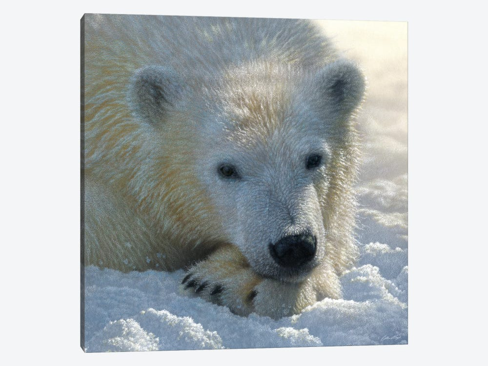 Polar Bear Cub, Square by Collin Bogle 1-piece Art Print