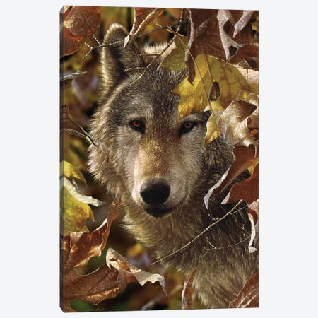 Autumn Shadows - Gray Wolf, Vertical Canvas Print #CBO5} by Collin Bogle Canvas Art Print