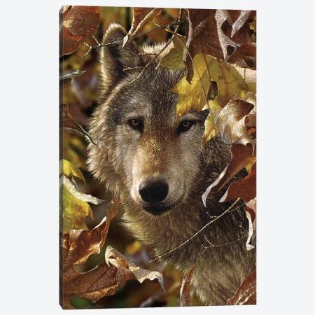 Autumn Shadows - Gray Wolf, Vertical Canvas Print #CBO5} by Collin Bogle Canvas Art Print