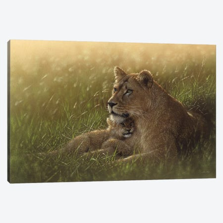 Safe Haven - Lion Mother & Cub, Horizontal Canvas Print #CBO60} by Collin Bogle Canvas Art Print