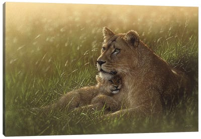 Safe Haven - Lion Mother & Cub, Horizontal Canvas Art Print