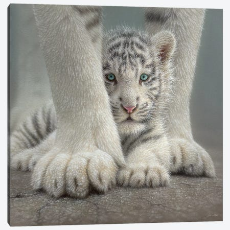 Sheltered - White Tiger Cub, Square Canvas Print #CBO62} by Collin Bogle Canvas Print