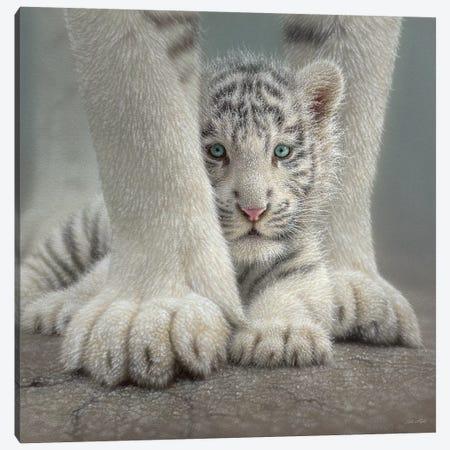 Sheltered - White Tiger Cub, Square Canvas Print #CBO62} by Collin Bogle Canvas Print