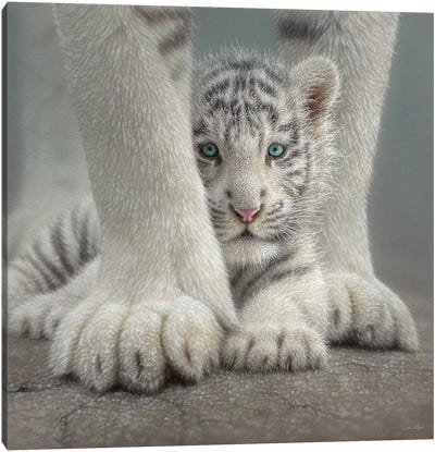 Sheltered - White Tiger Cub, Square Canvas Art Print
