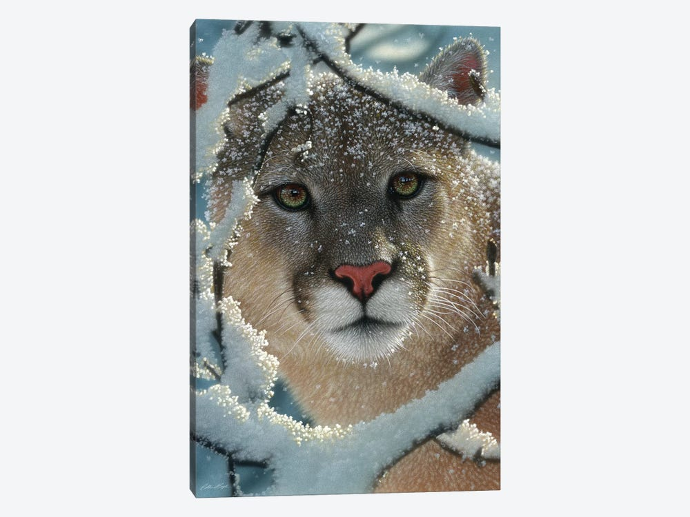 Silent Encounter - Cougar, Vertical by Collin Bogle 1-piece Canvas Art