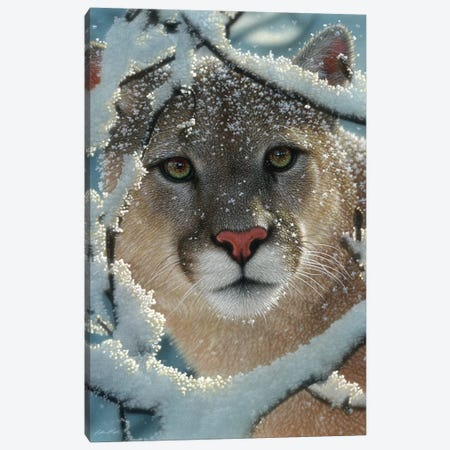 Silent Encounter - Cougar, Vertical 3-Piece Canvas #CBO63} by Collin Bogle Canvas Art Print