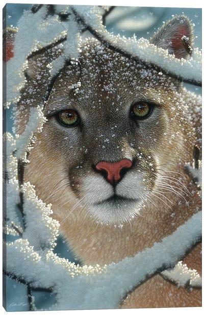 Silent Encounter - Cougar, Vertical Canvas Art Print