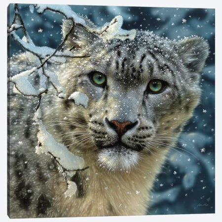 Snow Leopard, Square Canvas Print #CBO66} by Collin Bogle Canvas Wall Art