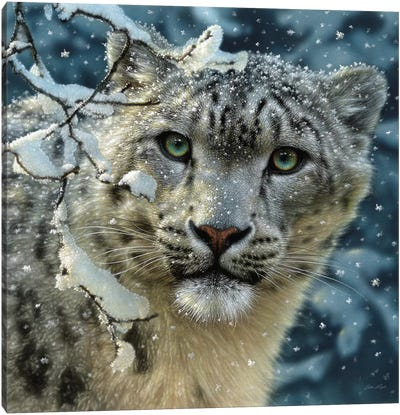 Snow Leopard, Square Canvas Art Print