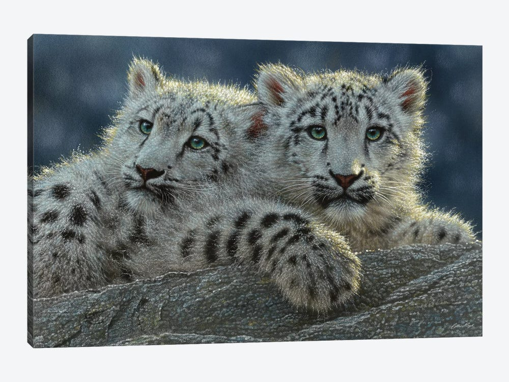 Snow Leopard Cubs, Horizontal by Collin Bogle 1-piece Canvas Wall Art