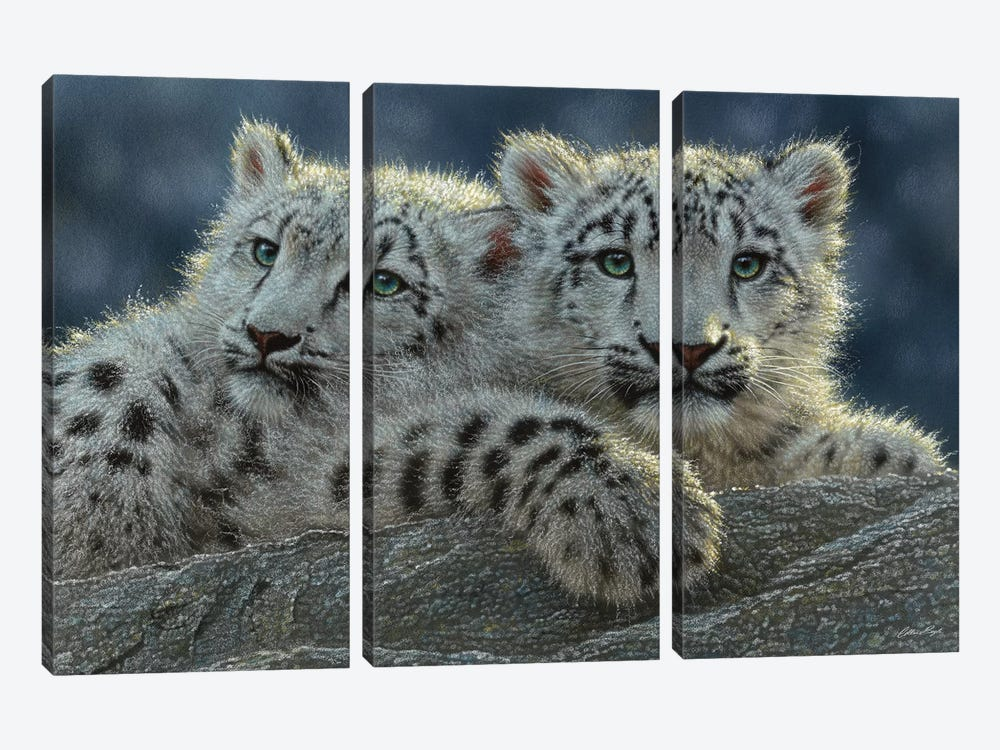 Snow Leopard Cubs, Horizontal by Collin Bogle 3-piece Canvas Art