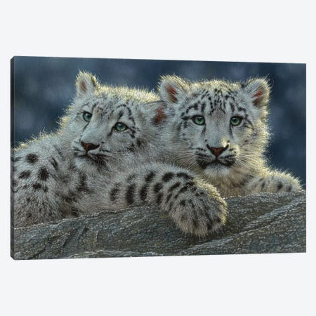 Snow Leopard Cubs, Horizontal 3-Piece Canvas #CBO67} by Collin Bogle Canvas Artwork