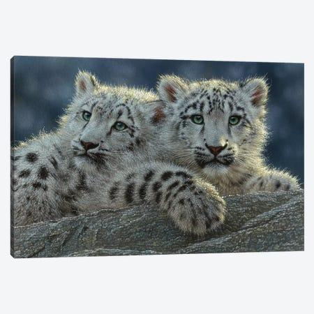 Snow Leopard Cubs, Horizontal Canvas Print #CBO67} by Collin Bogle Canvas Artwork