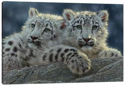 Snow Leopard Cubs, Horizontal Canvas Art Print