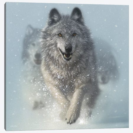 Snow Plow - Running Wolves, Square 3-Piece Canvas #CBO68} by Collin Bogle Canvas Print