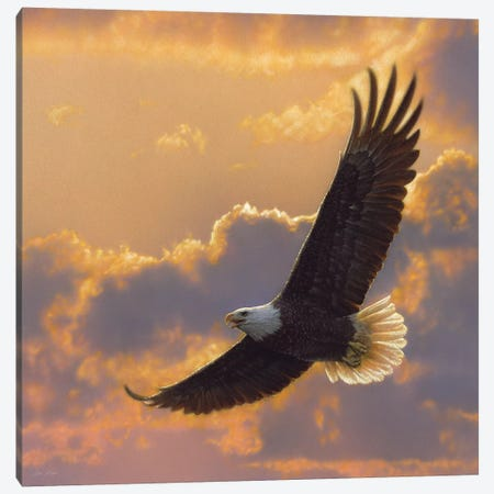 Soaring Spirit - Bald Eagle, Square Canvas Print #CBO70} by Collin Bogle Canvas Artwork
