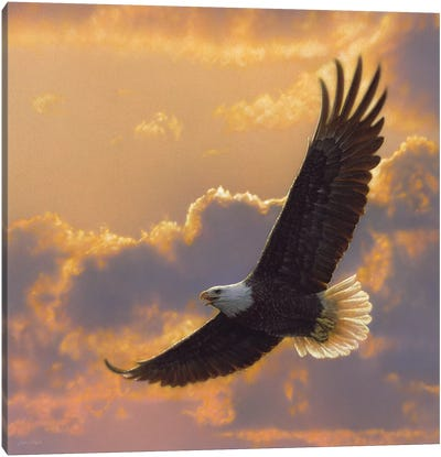 Soaring Spirit - Bald Eagle, Square Canvas Art Print