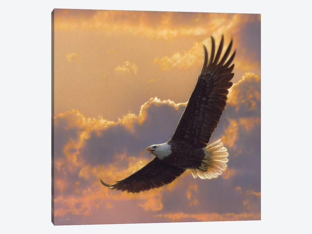 Soaring Spirit - Bald Eagle, Square by Collin Bogle 1-piece Canvas Wall Art