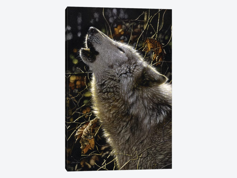 Howling Wolves' Songs Of Autumn, Square by Collin Bogle 1-piece Canvas Print