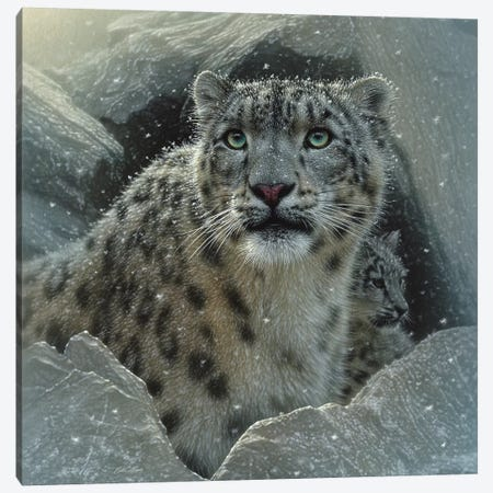Snow Leopard Fortress, Square Canvas Print #CBO72} by Collin Bogle Canvas Artwork