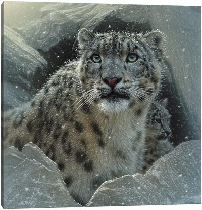 Snow Leopard Fortress, Square Canvas Art Print