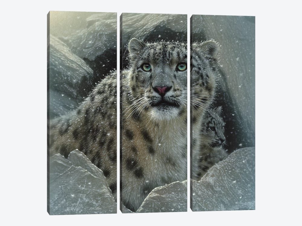 Snow Leopard Fortress, Square by Collin Bogle 3-piece Canvas Wall Art