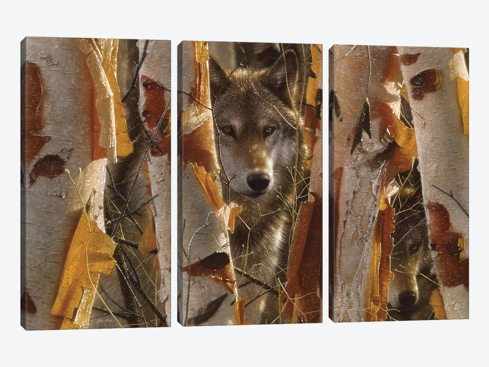 Wolf Guardian, Horizontal by Collin Bogle 3-piece Canvas Art