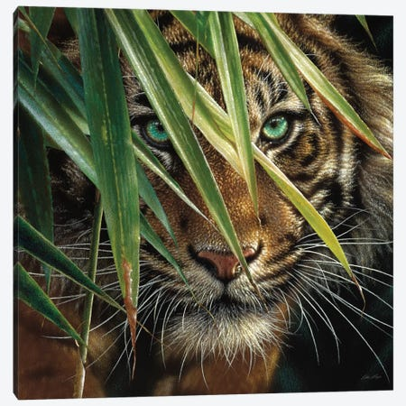 Tiger Eyes, Square Canvas Print #CBO76} by Collin Bogle Art Print