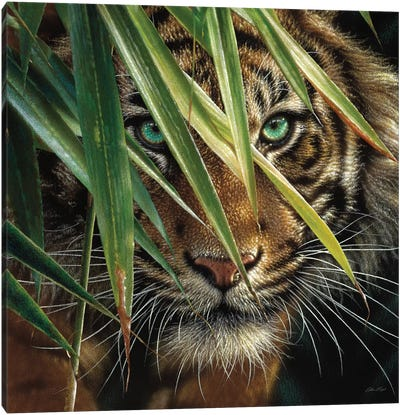 Tiger Eyes, Square Canvas Art Print