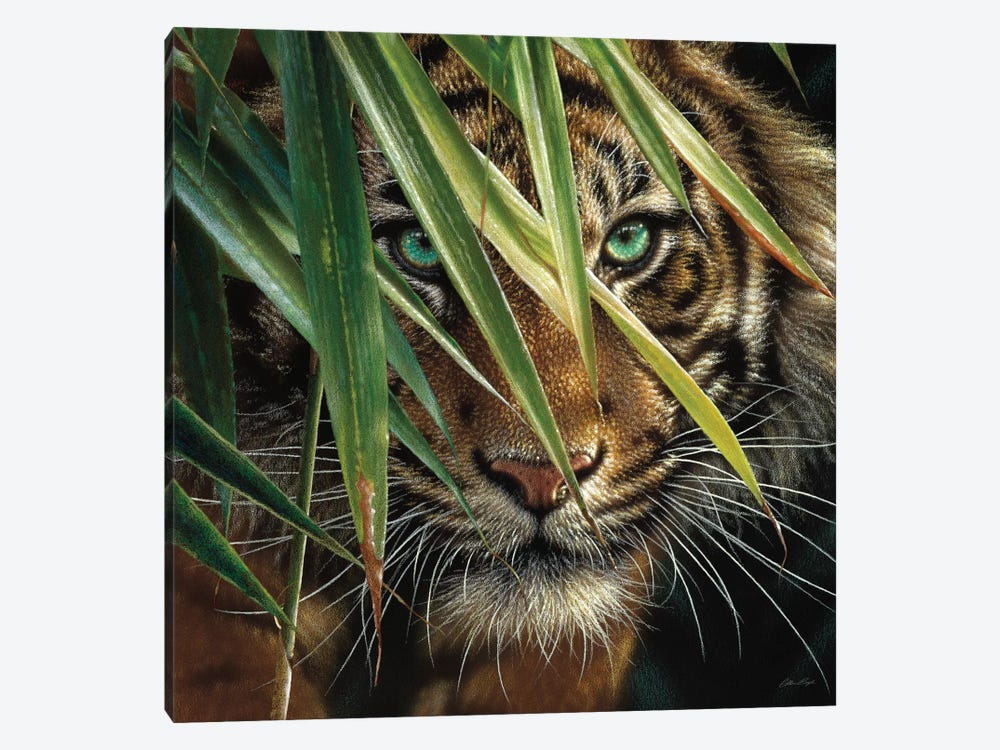 Tiger Eyes, Square by Collin Bogle 1-piece Canvas Wall Art