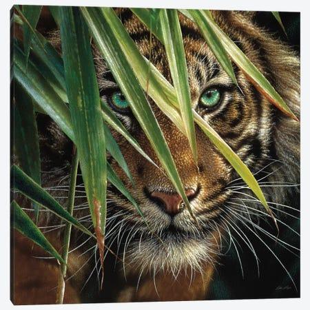 Tiger Eyes, Square Canvas Print #CBO76} by Collin Bogle Art Print