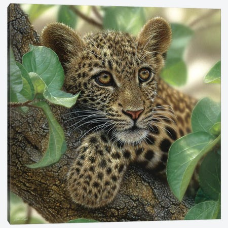 Tree Hugger - Leopard Cub, Square Canvas Print #CBO77} by Collin Bogle Canvas Print